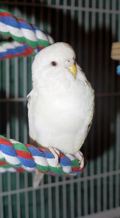 Lilla albinotjejen Freja